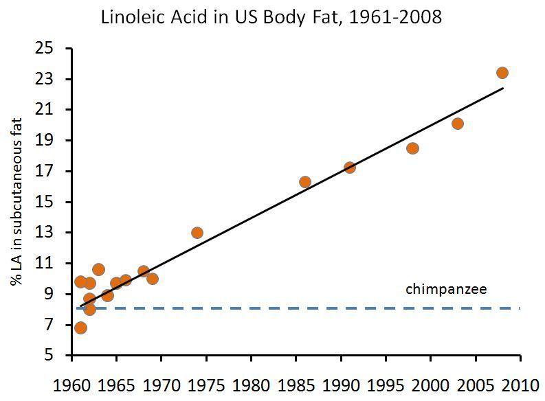 omega-6 en la grasa humana