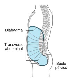 caja abdominal copy