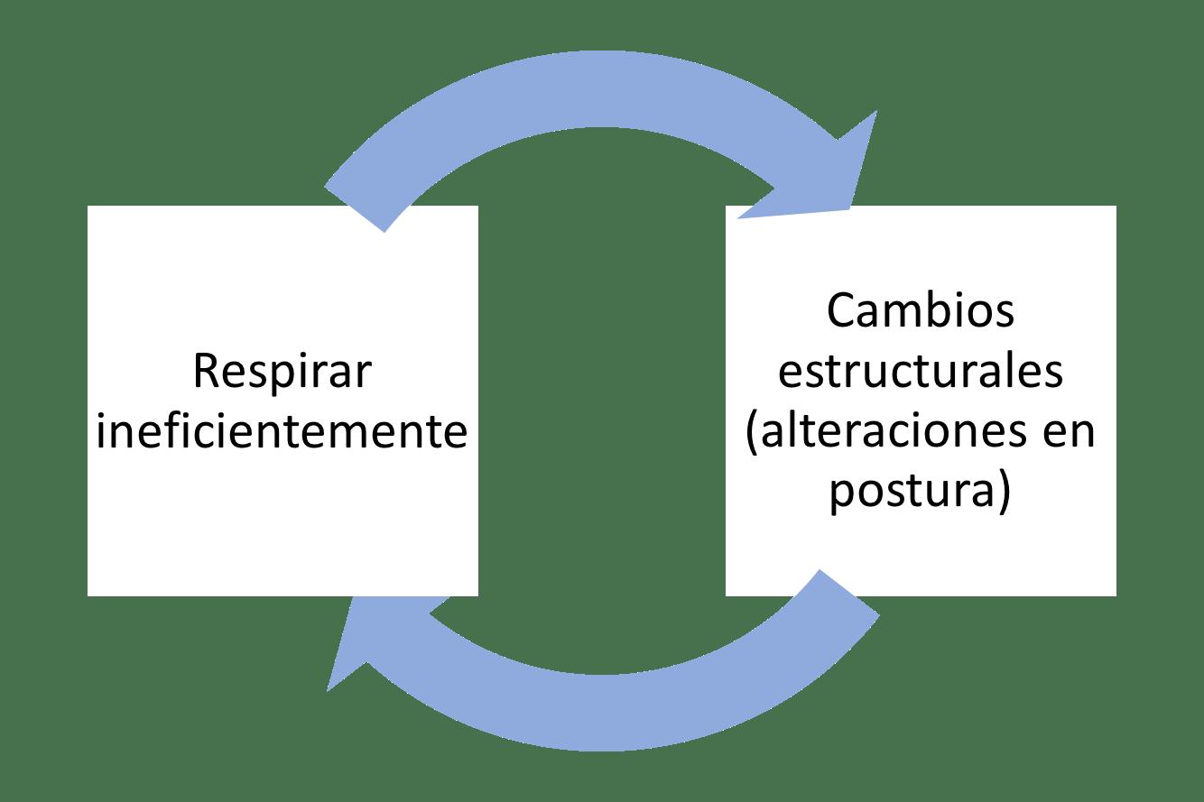 ciruclo postura