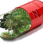 Vitamina N: dosis de naturaleza para mejorar tu salud física, mental y emocional