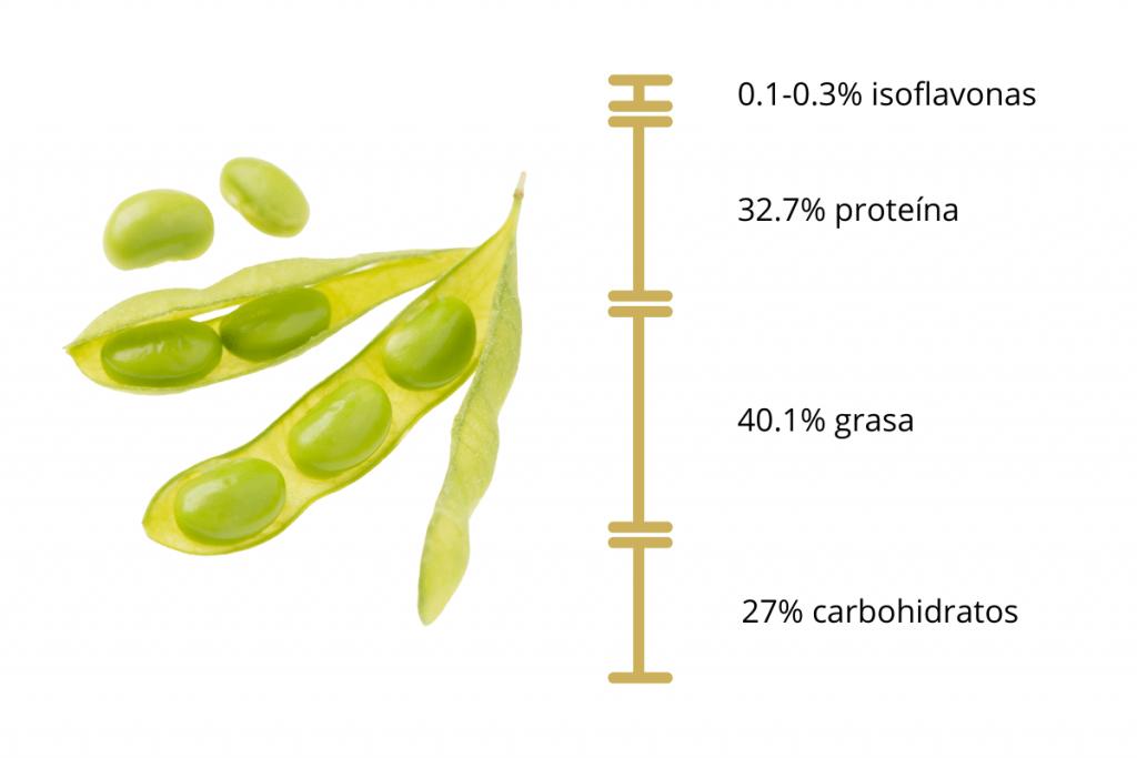 anatomía de la soya y contenido de isoflavonas